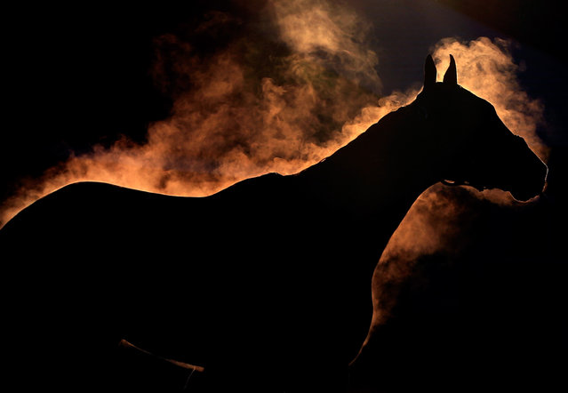 A horse gives off steam as it is bathed during early morning workouts ahead of the 140th Kentucky Derby at Churchill Downs on May 2, 2014 in Louisville, Kentucky. (Photo by Jamie Squire/Getty Images)