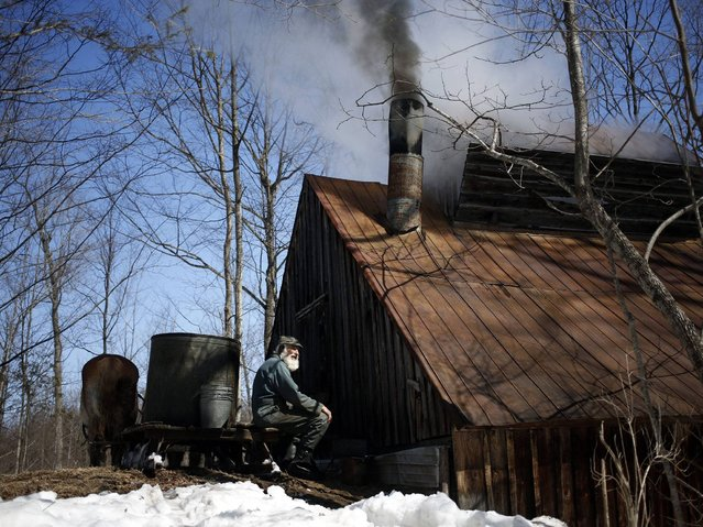 Wayne Pelton and his team of Belgian draft horses unload newly collected sap as smoke and steam rises from a wood fired evaporator at their old fashioned sugar bush camp in Burritts Rapids, Ontario, Canada, 03 April 2014. (Photo by Stephen Morrison/EPA)
