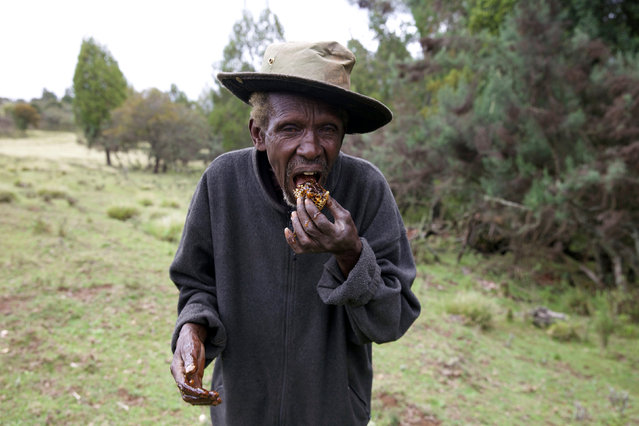 A man from KenyaÕs Ogiek community harvest honey in Mount Elgon game reserve, where they have reached an agreement with the government allowing them to remain in their ancestral lands in western Kenya April 26, 2016. (Photo by Katy Migiro/Reuters)
