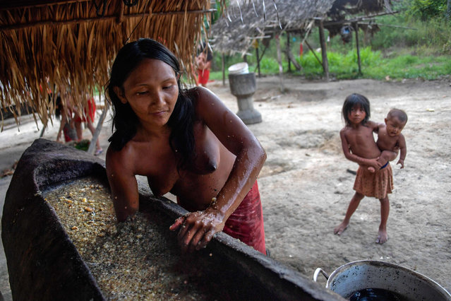 A Waiapi woman mixes water and manioc to prepare Caxiri, a craft beer made with Manioc, imbibed daily by men, women and children when is not sour yet, at the indigenous reserve Waiapi on the Manilha village in Amapa state in Brazil on October 13, 2017. (Photo by Apu Gomes/AFP Photo)