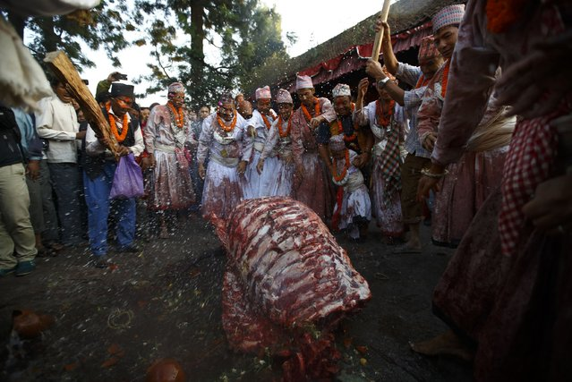 """Priests covered in bloodstains perform rituals in front of a buffalo carcass during the sacrificial ceremony held to mark the """"Dashain"""", Hinduism's biggest religious festival in Bhaktapur October 3, 2014. (Photo by Navesh Chitrakar/Reuters)"""