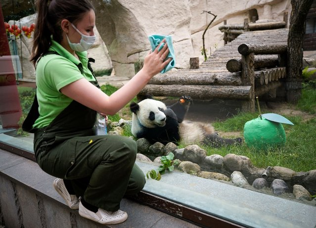 A worker cleans the glass of an enclosure with a giant panda in the Moscow Zoo prior its reopening on June 16 following loosened lockdown restrictions amid the coronavirus disease (COVID-19) outbreak in Moscow, Russia on June 15, 2020. (Photo by Tatyana Makeyeva/Reuters)