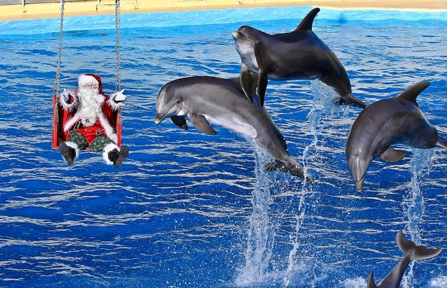 A man dressed in a Santa Claus costume poses for photographers with dolphins, at the animal exhibition park Marineland in Antibes, southern France, Tuesday, December 11, 2012. (Photo by Lionel Cironneau/AP Photo)