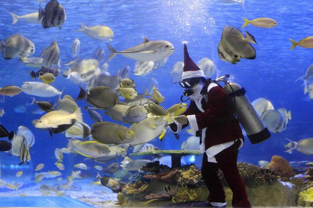 A diver wearing a Santa Claus costume feeds fish inside an oceanarium in Manila December 2, 2014. Filipinos are known for celebrating Christmas the longest by playing yuletide songs on  local radio stations and at malls as early as November until the observance of the Three Kings on the 1st week of January. (Photo by Romeo Ranoco/Reuters)