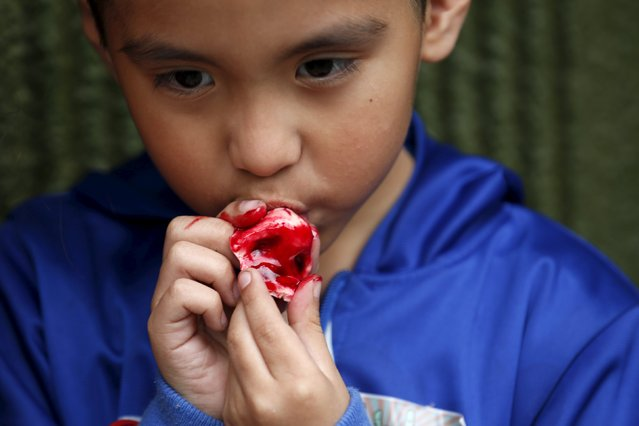 Logan Rios, 5,  eats a bloody ear made of gummy candy and red jelly at the Zombie Gourmet homemade candy manufacturer  on the outskirts of Mexico City October 30, 2015. (Photo by Carlos Jasso/Reuters)