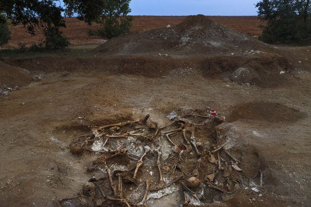 In this photo taken on July 24, 2014, skeletons are unearthed on what was a hidden mass grave during an excavation by the Aranzadi Sciences Society searching for the remains of those killed by their political ideology during and after the spanish civil war in El Estepar, Spain. (Photo by Daniel Ochoa de Olza/AP Photo)