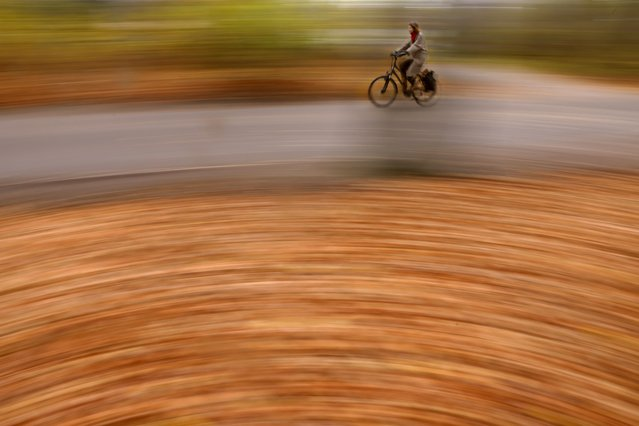 Fallen leaves cover the undergrowth as a commuter on a bicycle makes her way through the Tiergarten park in central Berlin on December 7, 2020. (Photo by Odd Andersen/AFP Photo)