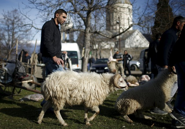 A man walks with a sheep for sacrifice outside a church during St. George's Day celebration in the village of Ikalto, Georgia, November 23, 2015. (Photo by David Mdzinarishvili/Reuters)