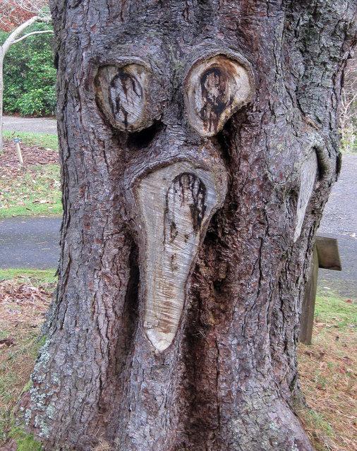 """Tree scream"". (Photo by Bill Kennedy)"