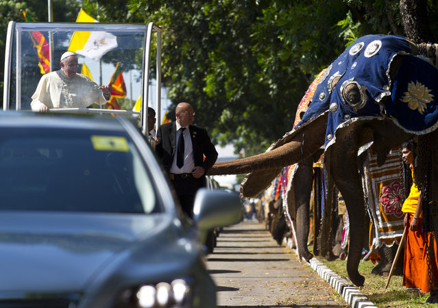 Pope Francis waves to people waiting on the road after crossing a row of decorated elephants standing to welcome him in Colombo, Sri Lanka, Tuesday, January 13, 2015. Pope Francis arrived in Sri Lanka Tuesday at the start of a weeklong Asian tour saying the island nation can't fully heal from a quarter-century of ethnic civil war without pursuing truth for the injustices committed. (Photo by Saurabh Das/AP Photo)