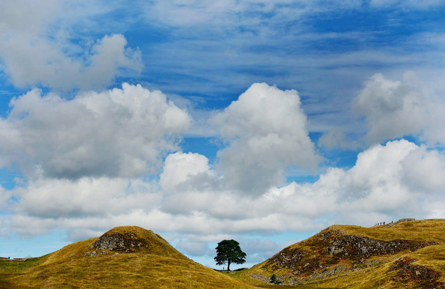 Sycamore Gap on Hadrians Wall in Northumberland on July 31, 2013, which featured in the film Robin Hood Prince of Thieves as as it was announced that July was the warmest, driest and sunniest since 2006. (Photo by  Owen Humphreys/PA Wire)