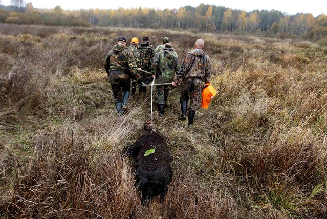 Hunters pull a killed wild boar in a forest near the village of Barovka, on Oktober 12, 2013. Hunters in Belarus can hunt for wild boars in the country's forests by buying a license that costs from 150 to 800 thousand Belarussian roubles ($16-88). License prices for locals dropped substantially after African swine fever was found in domestic pigs in several regions of the country. (Photo by Vasily Fedosenko/Reuters)