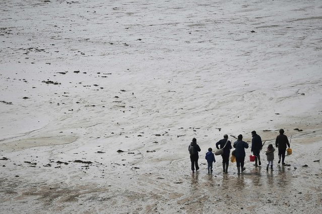 A family walks on the beach as they dig for shellfish during a record low tide in Saint Malo, western France, March 21, 2015. (Photo by Stephane Mahe/Reuters)