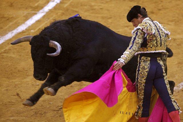 "Spanish bullfighter Julian Lopez ""El Juli"" performs a pass to a bull during a bullfight at the Malagueta bullring in Malaga, southern Spain, April 4, 2015. (Photo by Jon Nazca/Reuters)"
