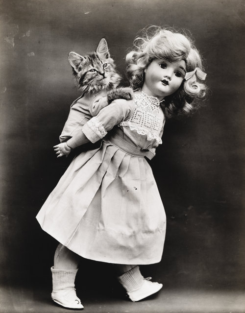 Photograph shows a doll giving a kitten a piggyback ride, 1914. (Photo by Harry Whittier Frees/Library of Congress)