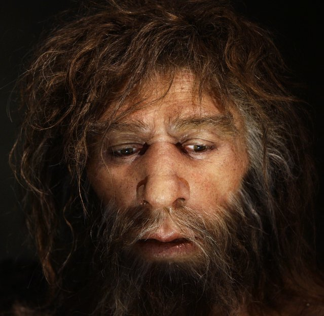 Hyperrealistic face of a neanderthal male is displayed in a cave in the new Neanderthal Museum in the northern Croatian town of Krapina in this February 25, 2010, file photo. Scientists said on March 18, 2016, an analysis of genetic information on about 1,500 people from locations around the world confirmed at least four interbreeding episodes tens of thousands of years ago, three with our close cousins the Neanderthals and one with the mysterious extinct human species known as Denisovans. (Photo by Nikola Solic/Reuters)