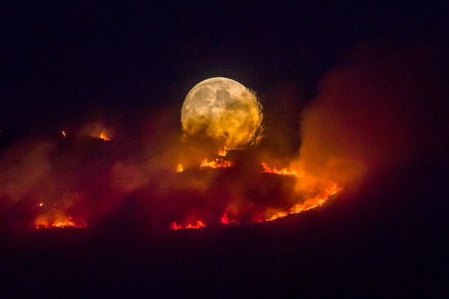 A full moon rises behind burning moorland as a large wildfire sweeps across the moors between Dovestone and Buckton Vale in Stalybridge, Greater Manchester on 26 June 2018. (Photo by Anthony Devlin/Getty Images)