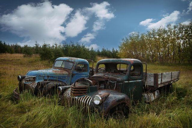1941 Chevrolet 1.5 tonnes are left to rot in a field. (Photo by Robert Kahl/Mediadrumworld)