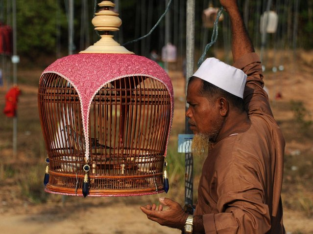 The judges award points to the birds' songs based on pitch, melody and volume and prize money can be up to one million baht (£18,000 or $31,000). (Photo by Madaree Tohlala/AFP Photo)