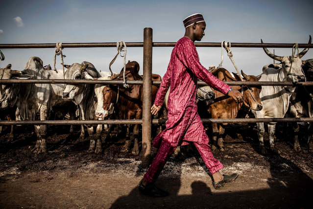 A cattle buyer walks looking for cattle transactions at Kara Cattle Market in Lagos, Nigeria, on April 10, 2019. (Photo by Luis Tato/AFP Photo)