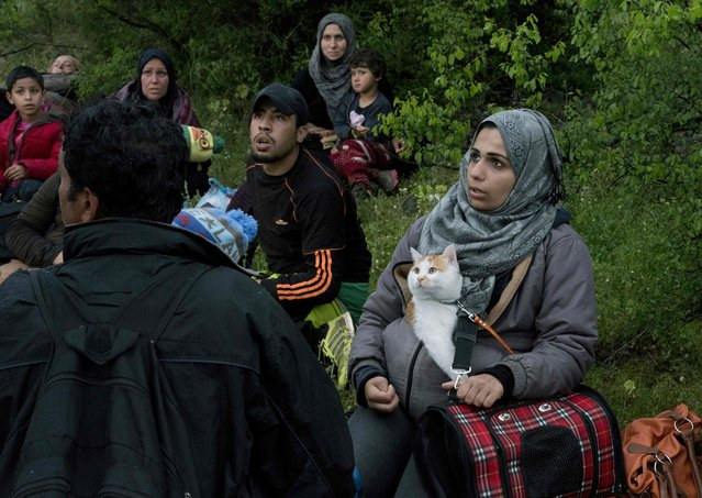 A group of Syrian rest while on the run in a forest in Macedonia after illegally crossing Greek-Macedonian border near the city of Gevgelija on April 23, 2016. Some 50,000 people, many of them fleeing the war in Syria, have been stranded in Greece since the closure of the migrant route through the Balkans in February. (Photo by Joe Klamar/AFP Photo)
