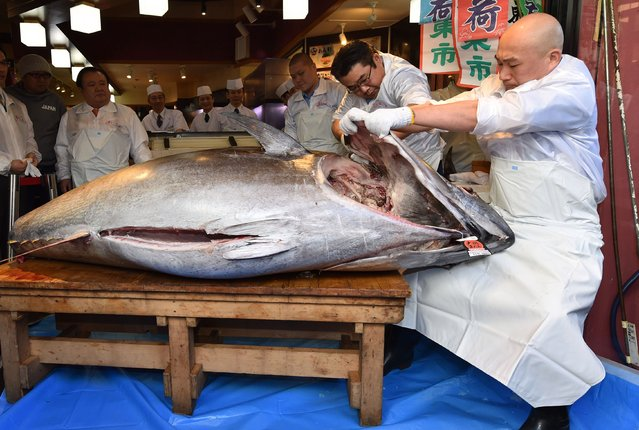 Employees for Kiyomura Corp., a Tokyo-based operator of sushi restaurant chain Sushizanmai, dismantle a bluefin tuna the company bought for 193.2 million yen (1.8 million USD) at auction at their main restaurant in Tokyo on January 5, 2020. Kiyomura Corp. made the winning bid of 1.8 million USD for a 276-kilogram bluefin tuna caught off Oma, Aomori prefecture at the first auction of the year earlier in the day at Tososu fish market. (Photo by Kazuhiro Nogi/AFP Photo)