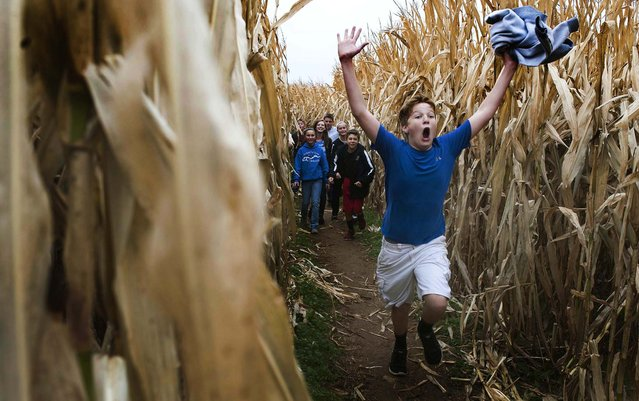 Boyle County Middle School seventh-grader Daniel Notter makes his way through the maze at Devine's Corn Maze in Mercer County near Harrodsburg, Kentucky October 26, 2012. (Photo by Clay Jackson/The Advocate-Messenger)