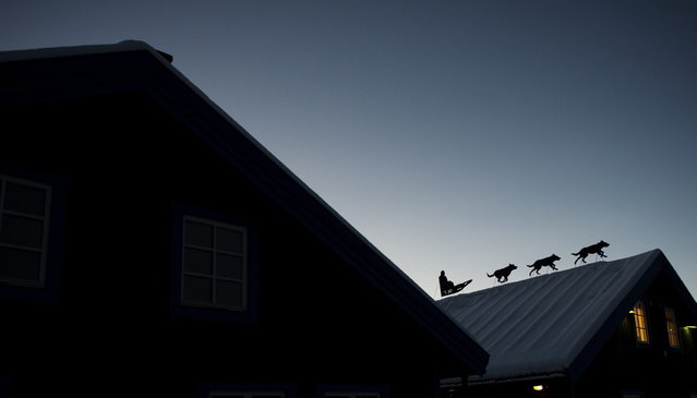 An art installation of dog sledge is placed on a rooftop in the village of Jukkasjarvi, near Kiruna, in Swedish Lapland on November 16, 2012. (Photo by Jonathan Nackstrand/AFP Photo)