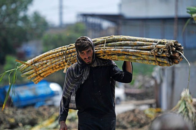 A labourer carries sugarcane to load onto a mini truck at the main vegetable and fruit market in Islamabad on July 7, 2020. (Photo by Aamir Qureshi/AFP Photo)