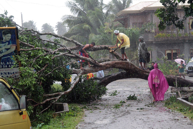 Workers clear a road with a fallen tree after Typhoon Bophal hit the city of Tagum, Davao del Norter province, on the southern island of Mindanao on December 4, 2012. Typhoon Bopha smashed into the southern Philippines early December 4, as more than 40,000 people crammed into shelters to escape the onslaught of the strongest cyclone to hit the country this year.(Photo by AFP Photo)