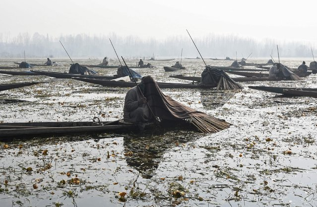 Indian Kashmiri fishermen catch fish with harpoons in Anchar Lake on the outskirts of Srinagar on December 28, 2017. The fishermen cover their heads and part of their boats with blankets and straw as part of their tactics to catch fish in the waters of the lake. (Photo by Tauseef Mustafa/AFP Photo)