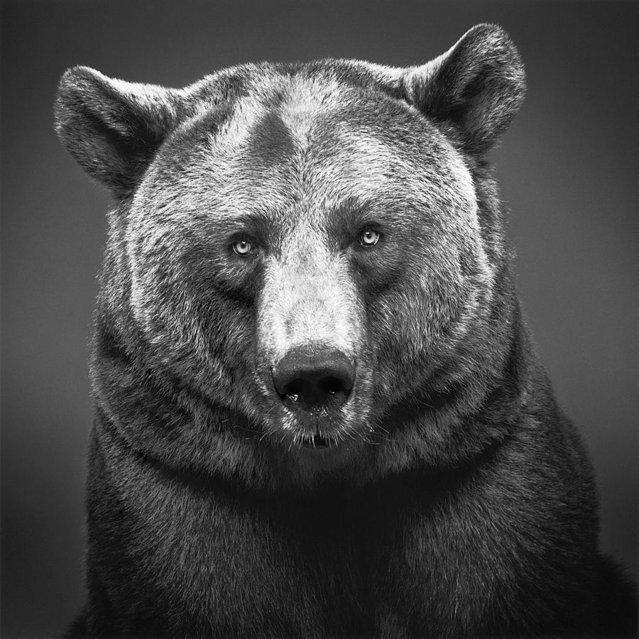 Animal Photographers By Alexander Von Reiswitz