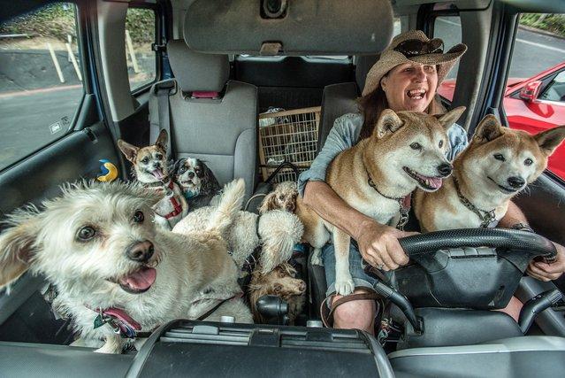 Dog Walker – 15:00. (Photo by Johanna Siegmann)