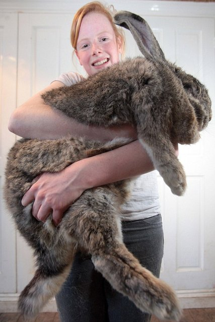 Ralph Is Worlds Biggest Bunny