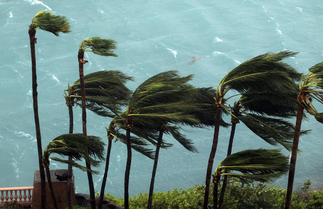 Wind brought by Hurricane Matthew blow palm trees on Paradise Island in Nassau, Bahamas, Thursday, October 6, 2016. (Photo by Tim Aylen/AP Photo)