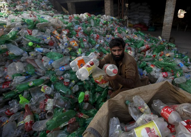 A man sorts empty plastic beverage bottles at a recycling center on the outskirts of Peshawar, Pakistan October 7,  2015. (Photo by Fayaz Aziz/Reuters)