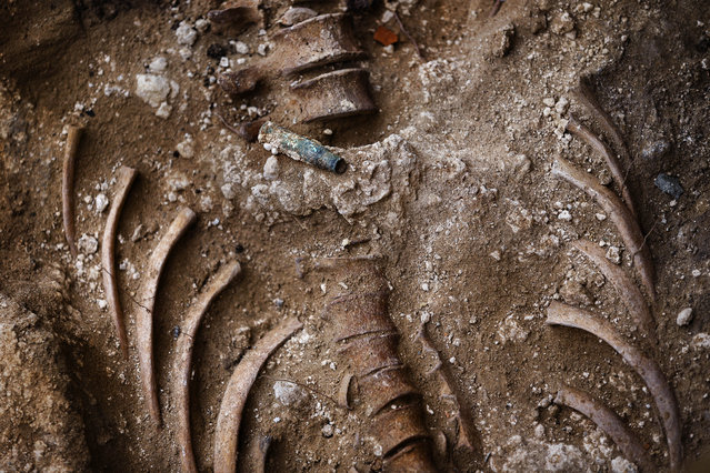 In this photo taken on December 16, 2014, a bullet shell stands on top of human bones found during an excavation searching for the remains of those killed by their political ideology during and after the Spanish civil war at a mass grave at the cemetery of Puerto Real, Spain. (Photo by Daniel Ochoa de Olza/AP Photo)