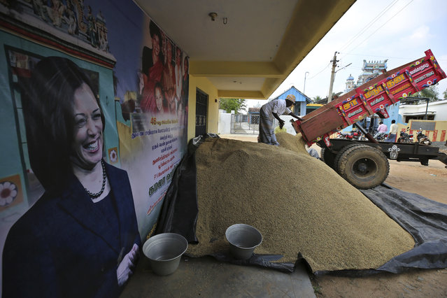 An Indian villager unloads paddy from a truck next to a banner displaying photographs of U.S. Vice President-elect Kamala Harris in Thulasendrapuram, the hometown of Harris' maternal grandfather, south of Chennai, Tamil Nadu state, India, Tuesday, January 19, 2021. The inauguration of President-elect Joe Biden and Vice President-elect Kamala Harris is scheduled be held Wednesday. (Photo by Aijaz Rahi/AP Photo)