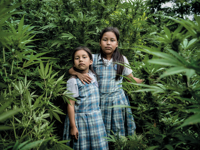 Astri Gisela Yunda López and Feryi Geraldin Yunda López stand in a cannabis field that belongs to their father. Cultivating marijuana risks bringing armed conflict but, as their father Jesús Antonio Yunda explains, without the income from these illegal crops he is unable to pay for the girls' school uniforms and to put food on the table. (Photo by Mads Nissen/Politiken/The Guardian/Panos Pictures)