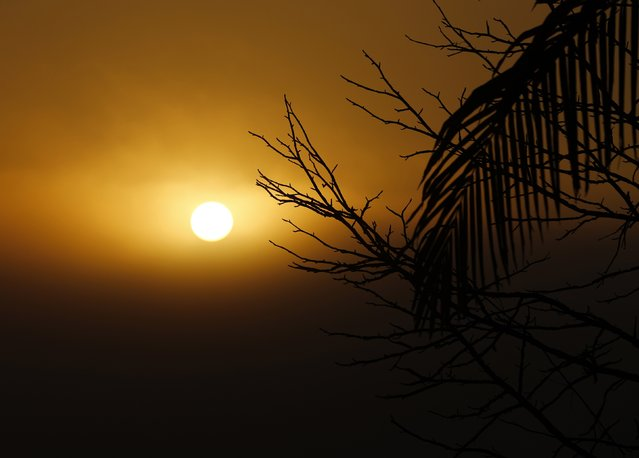 The morning sun rises through a bank of thick fog in Encinitas, California February 6, 2015. (Photo by Mike Blake/Reuters)