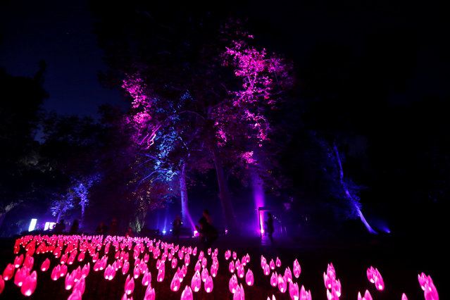 "Visitors walk through ""Flower Power"" which is part of the exhibit ""Enchanted: Forest of Light"" at Descanso Gardens in La Canada Flintridge, California U.S., December 9, 2016. (Photo by Mario Anzuoni/Reuters)"
