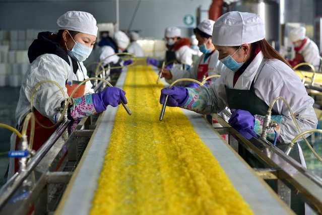 Employees work at a food processing factory in Yichang, Hubei province, January 17, 2016. (Photo by Reuters/Stringer)