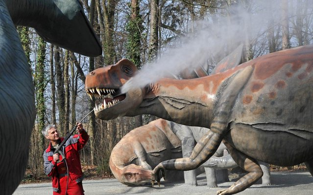 Tom Gloess works on the cleaning of a dinosaur sculpture at the Saurierpark dinosaur theme park in Kleinwelka, eastern Germany, on March 25, 2015. Around 200 life-size models of dinosaurs are on display at the park that will open its season on April 1, 2015. (Photo by Matthias Hiekel/AFP Photo/DPA)