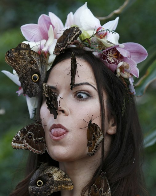"""Model Jessie May Smart reacts to a Blue Morpho butterfly, as she poses for pictures ahead of the opening of, """"Butterflies in the Glasshouse"""", at RHS Wisley in Wisley, Britain, January 13, 2017. (Photo by Peter Nicholls/Reuters)"""