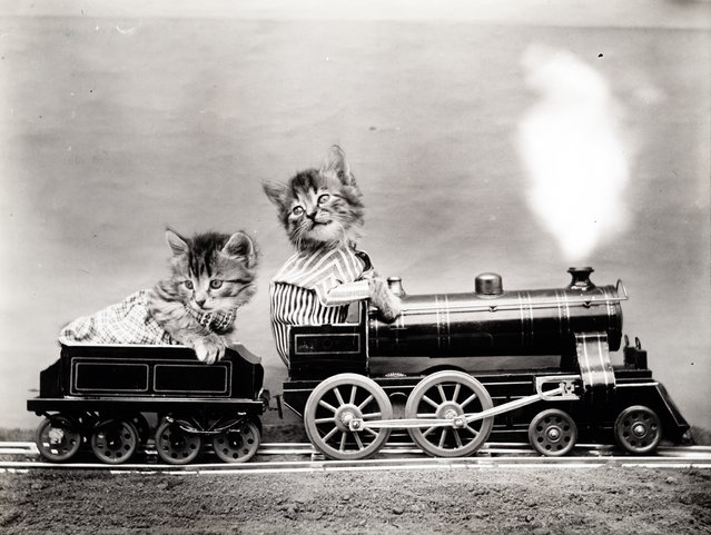 Photograph shows two kittens wearing clothes and placed inside a toy train, 1914. (Photo by Harry Whittier Frees/Library of Congress)