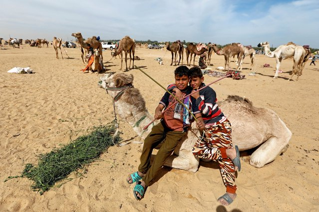Sayed Mohamed (L), 11-year-old jockey, waits with his friend Mahmoud Mahmed, a 13-year-old jockey, for the opening of the 18th International Camel Racing festival at the Sarabium desert in Ismailia, Egypt, March 12, 2019. (Photo by Amr Abdallah Dalsh/Reuters)