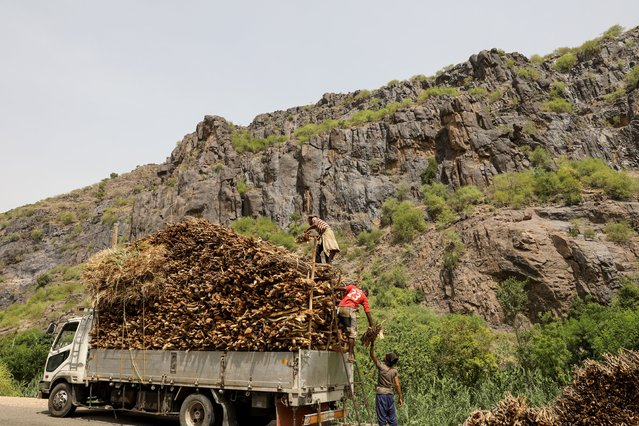 Lumberjacks load bundles of firewood onto a truck in Khamis Banisaad district of al-Mahweet province, Yemen, June 24, 2021. More than six years of war between the recognised government backed by a Saudi-led coalition and the Houthi movement aligned with Iran has killed tens of thousands of people and left 80% of Yemen's population reliant on aid. The fuel shortages due to a coalition blockade on Houthi-held areas, including limiting access to the main port of Hodeidah, have led businesses and families to swap diesel and gas for firewood. The alliance says the blockade is needed to foil arms smuggling. (Photo by Khaled Abdullah/Reuters)