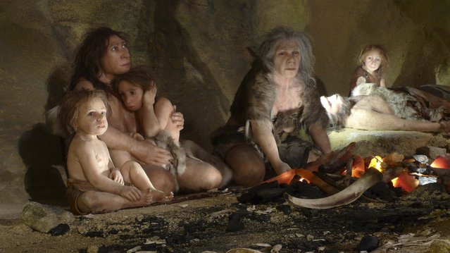 An exhibit shows the life of a neanderthal family in a cave in the new Neanderthal Museum in the northern town of Krapina in this February 25, 2010, file photo. (Photo by Nikola Solic/Reuters)