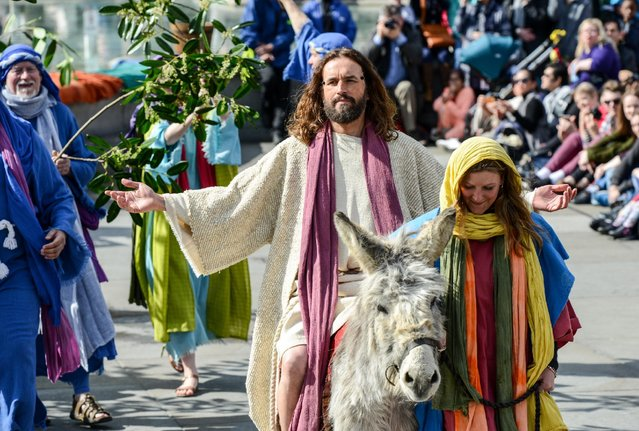 "Actor James Burke-Dunsmore enters on a donkey through palm leaves whilst playing Jesus during The Wintershall's ""The Passion of Jesus"" in front of crowds on Good Friday at Trafalgar Square on March 25, 2016 in London, England. (Photo by Chris Ratcliffe/Getty Images)"
