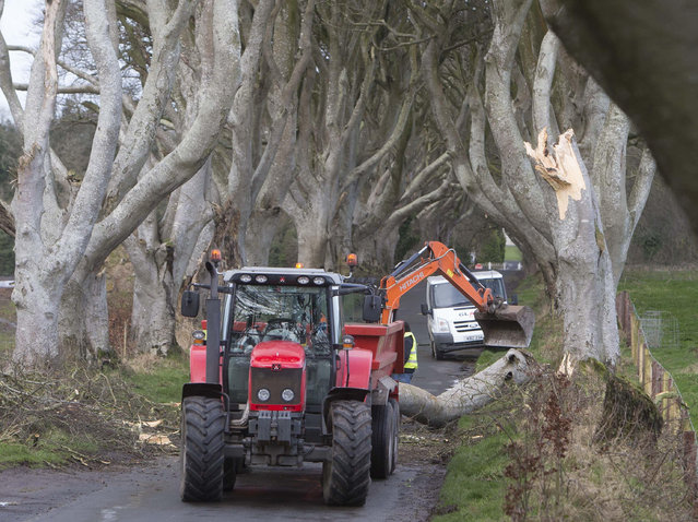 Workmen clear a fallen tree after the tree-lined avenue was damaged in Storm Doris, at Dark Hedges in County Antrim, Northern Ireland, Thursday, February 23, 2017. Flights have been cancelled and commuters were warned they faced delays after Storm Doris reached nearly 90mph. One of the beech trees that make up Dark Hedges, made famous by fantasy drama Game Of Thrones, has fallen victim to high winds that have battered Northern Ireland. (Photo by Steven McAuley/PA Wire via AP Photo)